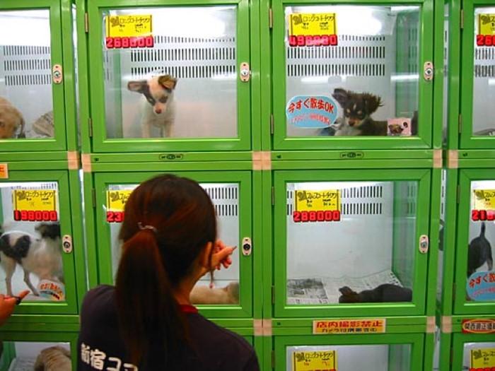 ARK-pet-store